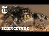 如何幫蜘蛛量視力?(How to Give a Spider an Eye Test | ScienceTake) Image