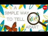 【TED-Ed】這是哪種昆蟲呢?透過口器簡單辨別昆蟲種類 (A simple way to tell insects apart - Anika Hazra) Image
