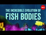 【TED-Ed】為什麼魚會長得那副魚樣?(Why are fish fish-shaped? - Lauren Sallan) Image