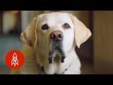 狗狗大使給你可愛的假期 (These 'Canine Ambassadors' Are About to Make Your Vacation Adorable) Image