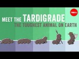 認識地球上最強大的動物 (Meet the tardigrade, the toughest animal on Earth - Thomas Boothby) Image