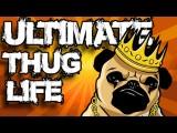 可愛的動物 (Ultimate Animal Thug Life Compilation #1) () Image