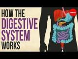 你的消化系統如何工作 (How your digestive system works) Image
