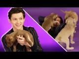 玩瘋了!Tom Holland 在狗狗包圍下回覆粉絲問題 (Tom Holland Plays With Puppies While Answering Fan Questions) Image