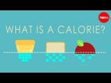 【TED-Ed】什麼是卡路里? (What is a calorie? - Emma Bryce) Image