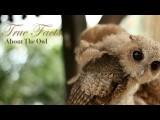 【泛科學精選】你有所不知的貓頭鷹 (True Facts About The Owl) Image