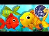 Numbers Song | Counting Fish | Nursery Rhymes | Original Song By LittleBabyBum! Image