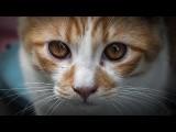 大家都誤會貓了!破解你的迷思 (This Is What Everyone Gets Wrong About Cats) Image
