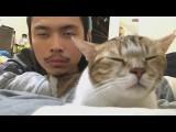 【艾倫秀】「淡定」點頭貓夯上艾倫秀!喵星人影片萌爆你 (You Can Never Have Too Many Cat Videos) Image