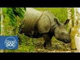 印度犀牛 (Indian Rhinoceros Full Documentary | On The Tracks Of The Unicorn - Planet Doc Full Documentaries) Image
