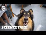 實測你家狗狗有沒有同理心 (How Empathetic Is Your Dog? | ScienceTake) Image