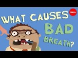 【TED-Ed】你有口臭嗎?來看看為什麼 (What causes bad breath? - Mel Rosenberg) Image