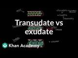 水胸 (Transudate vs exudate | Respiratory system diseases | NCLEX-RN | Khan Academy) Image