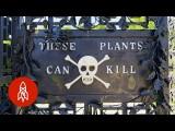史上最毒花園!碰到任何一株植物都會讓你死翹翹 (Enter the Deadliest Garden in the World) Image