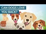 哭哭,你的狗狗真的愛你嗎? (Does Your Dog Really Love You?) Image