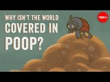 【TED-Ed】為什麼地球表面還沒被大便淹沒!? (Why isn't the world covered in poop? - Eleanor Slade and Paul Manning) Image
