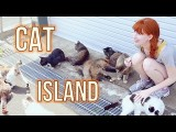 【Rachel and Jun】日本宮城縣貓島 (CAT ISLAND in Japan! Tashirojima) Image