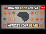 【TED-Ed】你進食的食物是如何影響大腦 (How the food you eat affects your brain - Mia Nacamulli) Image